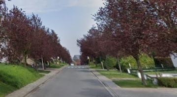 Opmaak bomenbeleidsplan straat- en laanbomen van start