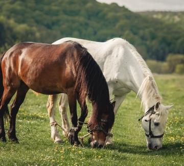 Foto van paarden