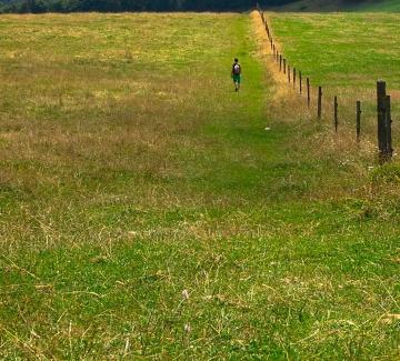 Dilbeek op wandel, zomereditie