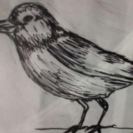 vogeltekening 1