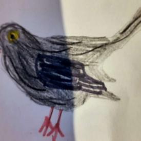 vogeltekening 2