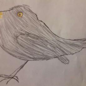 vogeltekening 3